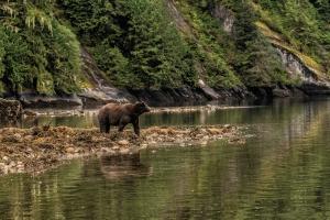 Great Bear Rainforest with bear